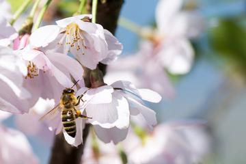 Iz majhnega družinskega čebelarstva do svoje kozmetične linije WILD BEE²