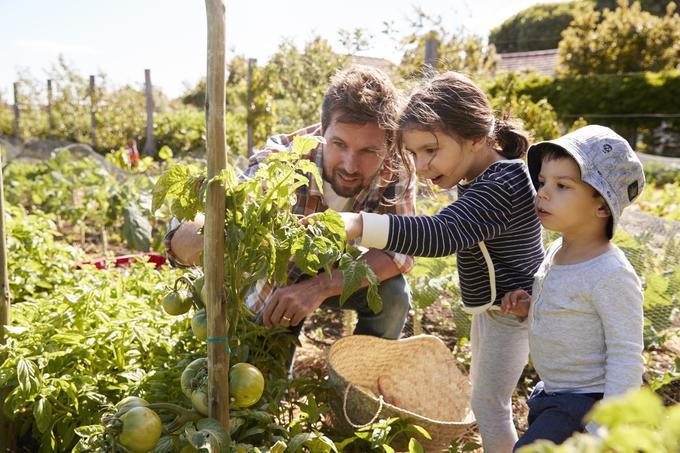 vrt, vrtnarjenje