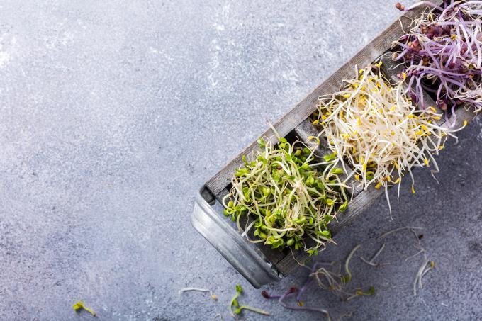 Kalčke v nasprotju z mikrozelenjavo uživamo cele, s korenino vred.