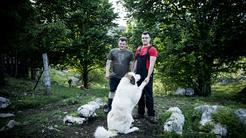 Family Farm Sedmak Pastirski pas Turci Pas Pivka