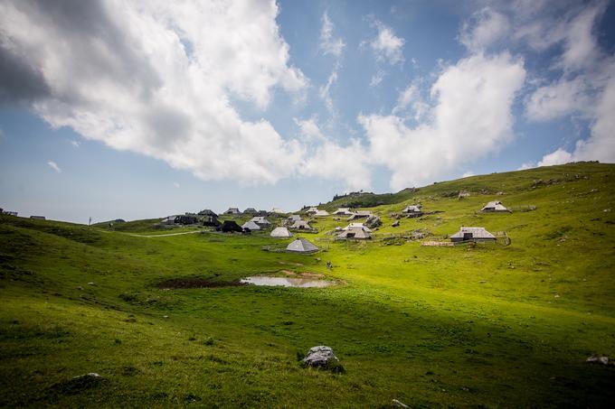 V pastirskem naselju v Velikem stanu je skupno 64 pastirskih koč, a v tej dejavnosti je aktiven manjši del pastirjev. Letos je na Veliki planini odprtih 17 pastirskih koč, na planoto pa je letos večina prišla 10. junija.
